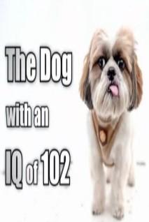 IQ爆棚机灵狗